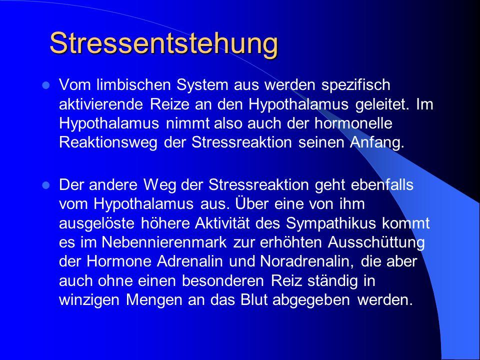 Stressentstehung Vom limbischen System aus werden spezifisch aktivierende Reize an den Hypothalamus geleitet. Im Hypothalamus nimmt also auch der horm