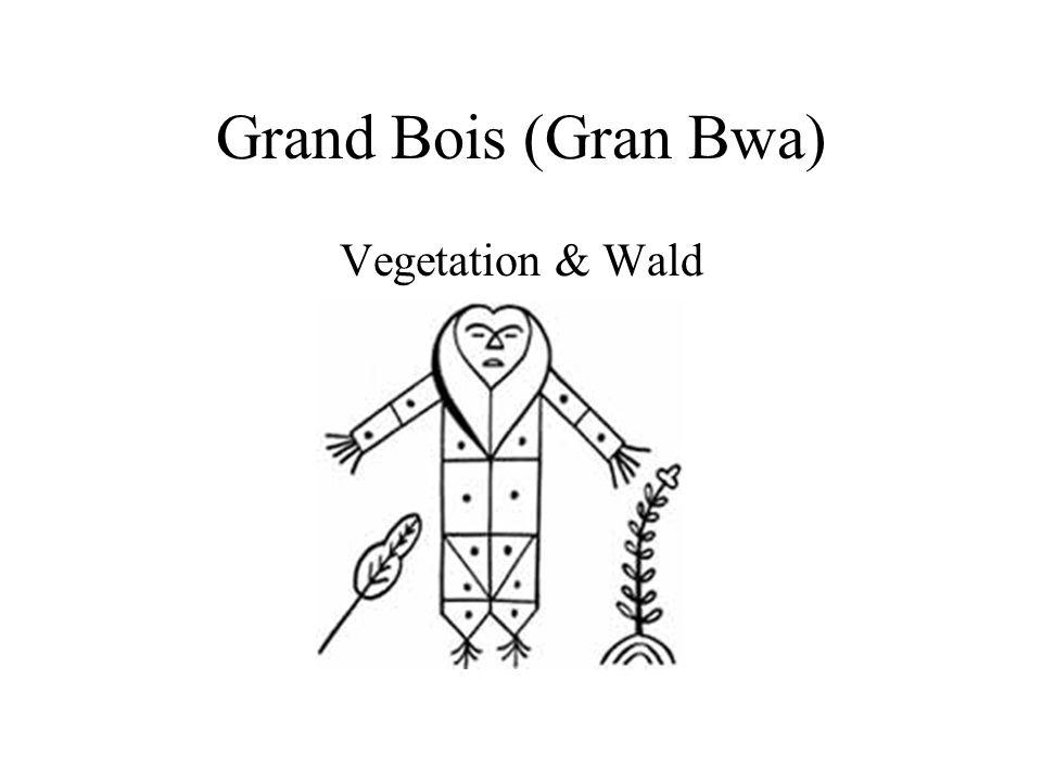 Grand Bois (Gran Bwa) Vegetation & Wald