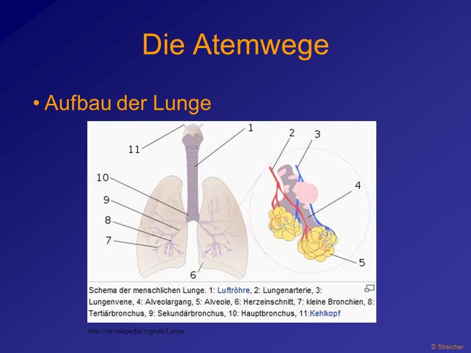Die Atemwege © Streicher Aufbau der Lunge http://de.wikipedia.org/wiki/Lunge