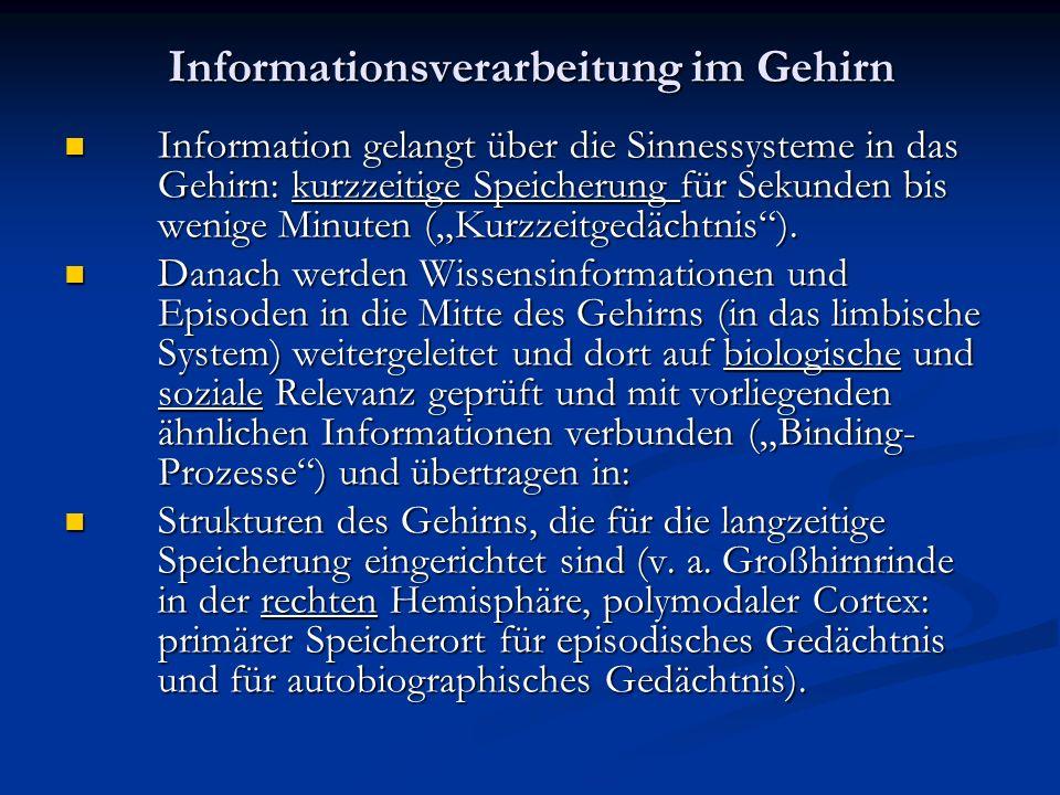 Informationsverarbeitung im Gehirn Information gelangt über die Sinnessysteme in das Gehirn: kurzzeitige Speicherung für Sekunden bis wenige Minuten (