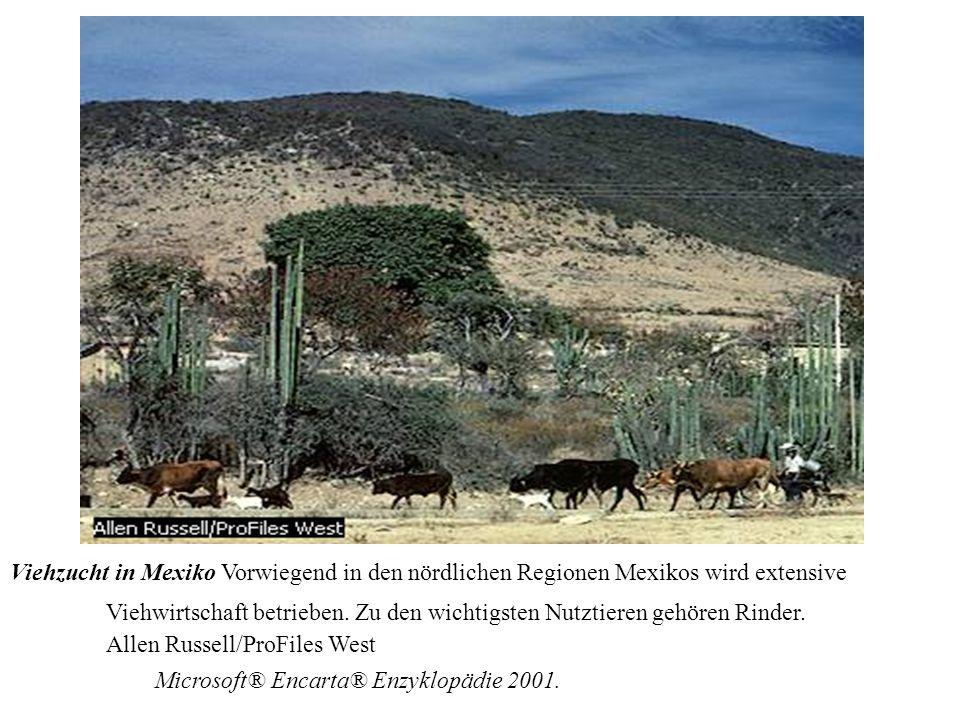 Seit 1960: 25% der Wälder Südamerikas --> Weideland 1979: USA importieren 110.000 Tonnen Rindfleisch (Höchststand) Rindfleischproduktion auf Latifundien --> Landkonzentration USA-amerikanische Firmen (Borden, United Brands, International Foods) und MNK (Cargill, Ralston Purina, W.R.