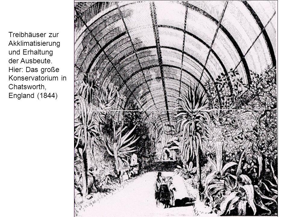 Treibhäuser zur Akklimatisierung und Erhaltung der Ausbeute. Hier: Das große Konservatorium in Chatsworth, England (1844)