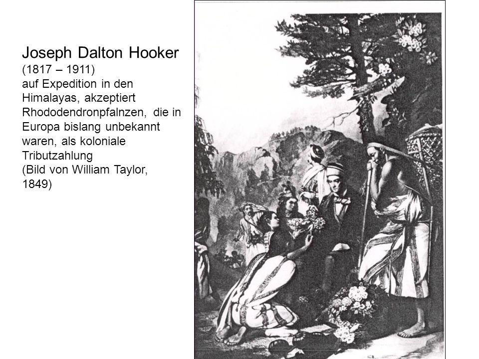 Joseph Dalton Hooker (1817 – 1911) auf Expedition in den Himalayas, akzeptiert Rhododendronpfalnzen, die in Europa bislang unbekannt waren, als koloni