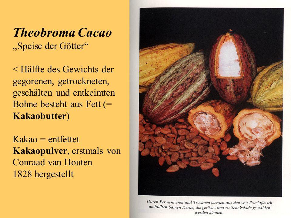 Theobroma Cacao Speise der Götter < Hälfte des Gewichts der gegorenen, getrockneten, geschälten und entkeimten Bohne besteht aus Fett (= Kakaobutter) Kakao = entfettet Kakaopulver, erstmals von Conraad van Houten 1828 hergestellt