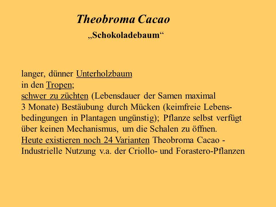 Chemische Bestandteile der Kakaobohne: Kakaobutter ( 10%) Verfahren: 1.
