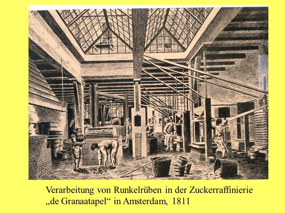 Verarbeitung von Runkelrüben in der Zuckerraffinierie de Granaatapel in Amsterdam, 1811