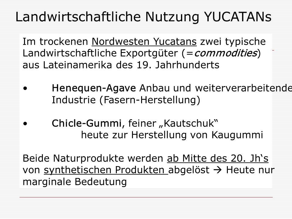 Landwirtschaftliche Nutzung YUCATANs Im trockenen Nordwesten Yucatans zwei typische Landwirtschaftliche Exportgüter (=commodities) aus Lateinamerika d