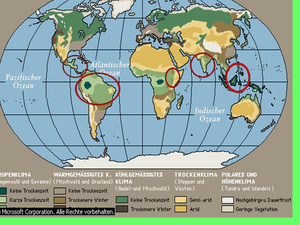 Wichtigste Erzeugerländer PRODUKTION 1997 (in Tausend Tonnen) Weltproduktion5 676 Brasilien1 212 Kolumbien696 Mexiko336 Indonesien290 Vietnam253 Äthiopien246 Uganda228 Guatemala216 Indien205 Ecuador180