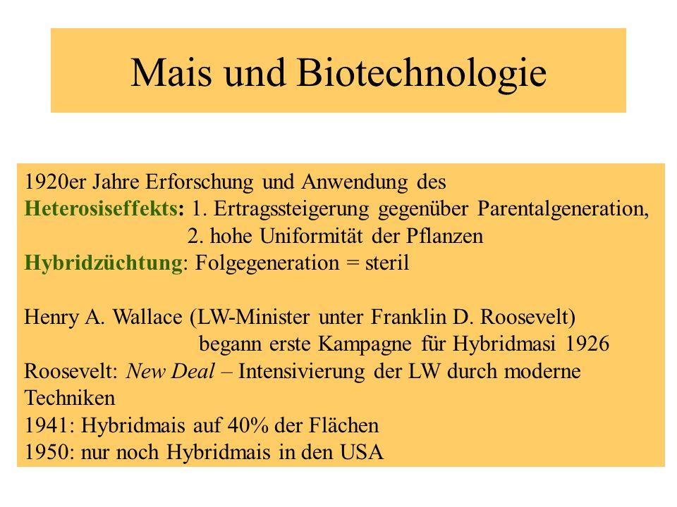 Mais und Biotechnologie 1920er Jahre Erforschung und Anwendung des Heterosiseffekts: 1. Ertragssteigerung gegenüber Parentalgeneration, 2. hohe Unifor