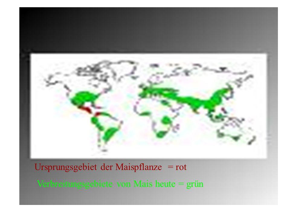 Ursprungsgebiet der Maispflanze = rot Verbreitungsgebiete von Mais heute = grün