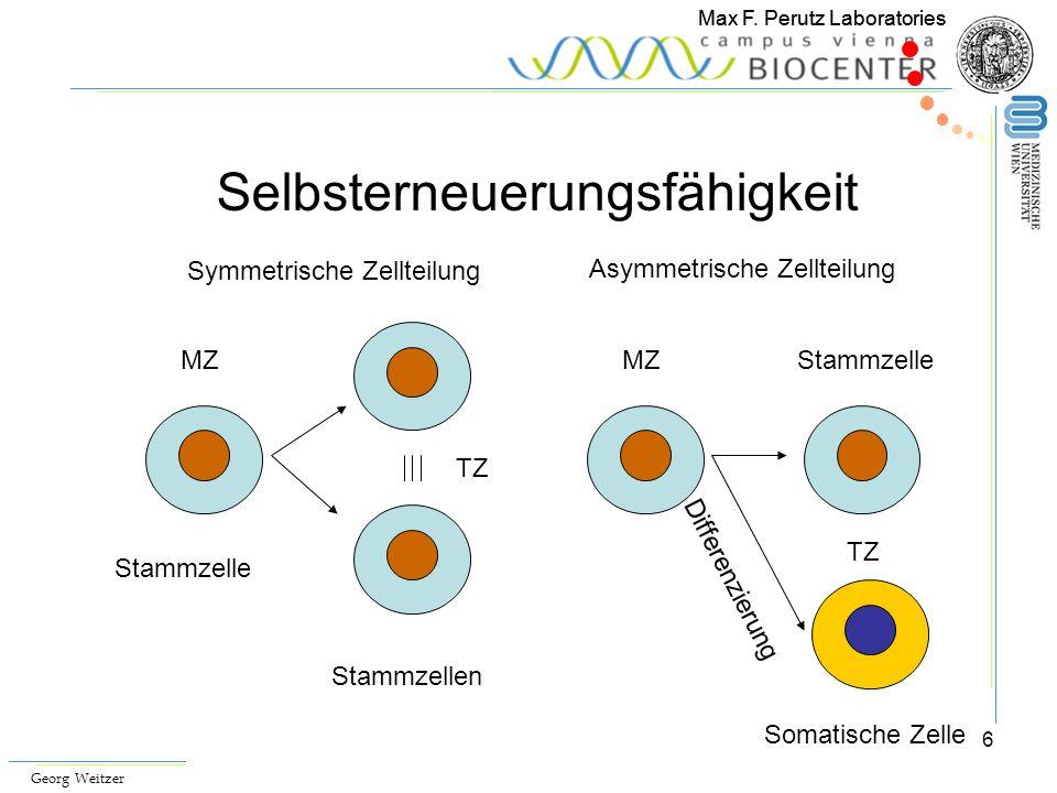 6 Max F. Perutz Laboratories Selbsterneuerungsfähigkeit MZ Symmetrische Zellteilung Asymmetrische Zellteilung Somatische Zelle TZ Stammzelle Stammzell