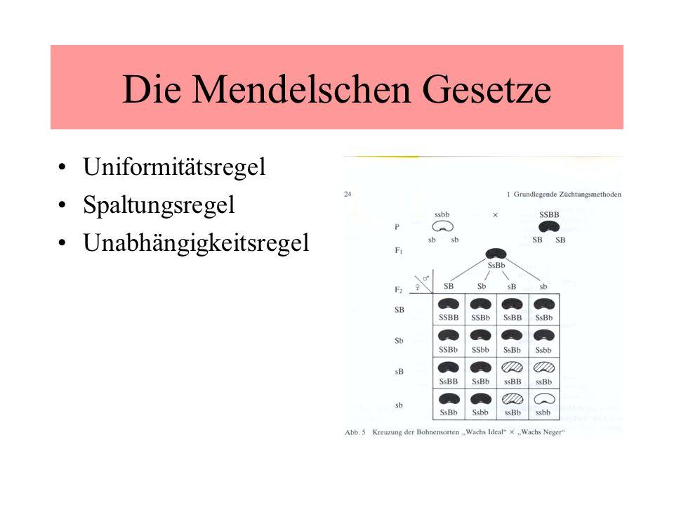 Die Mendelschen Gesetze Uniformitätsregel Spaltungsregel Unabhängigkeitsregel