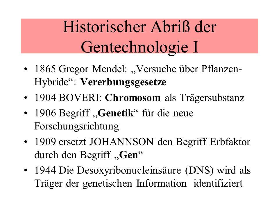 Historischer Abriß der Gentechnologie I 1865 Gregor Mendel: Versuche über Pflanzen- Hybride: Vererbungsgesetze 1904 BOVERI: Chromosom als Trägersubsta