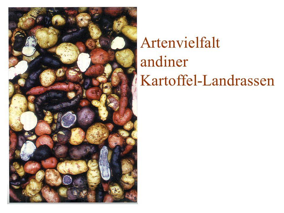 Artenvielfalt andiner Kartoffel-Landrassen