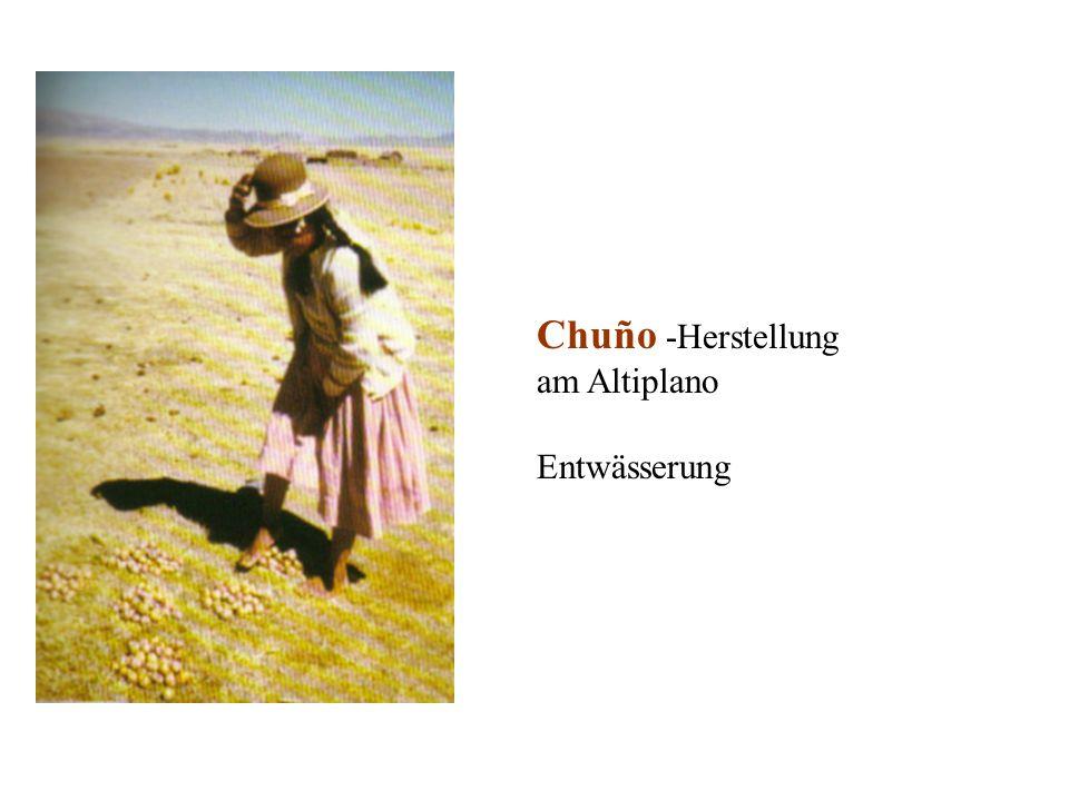 Chuño -Herstellung am Altiplano Entwässerung