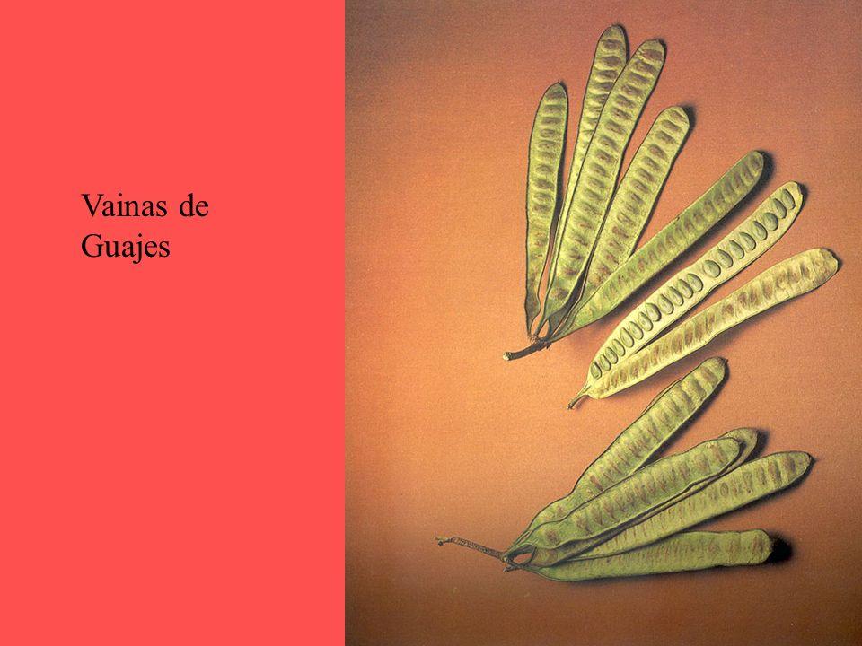 Vainas de Guajes