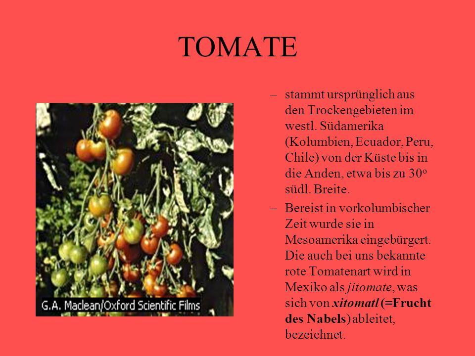 TOMATE –stammt ursprünglich aus den Trockengebieten im westl. Südamerika (Kolumbien, Ecuador, Peru, Chile) von der Küste bis in die Anden, etwa bis zu