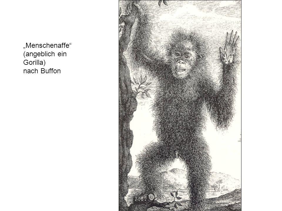 Menschenaffe (angeblich ein Gorilla) nach Buffon