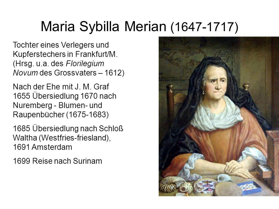 Maria Sybilla Merian (1647-1717) Tochter eines Verlegers und Kupferstechers in Frankfurt/M. (Hrsg. u.a. des Florilegium Novum des Grossvaters – 1612)