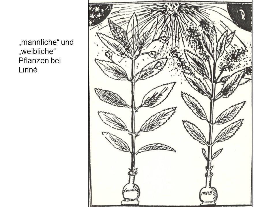 männliche und weibliche Pflanzen bei Linné