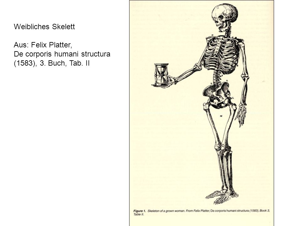 Weibliches Skelett Aus: Felix Platter, De corporis humani structura (1583), 3. Buch, Tab. II