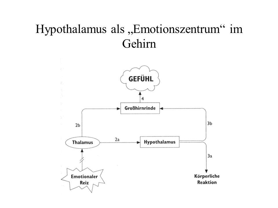 Hypothalamus als Emotionszentrum im Gehirn