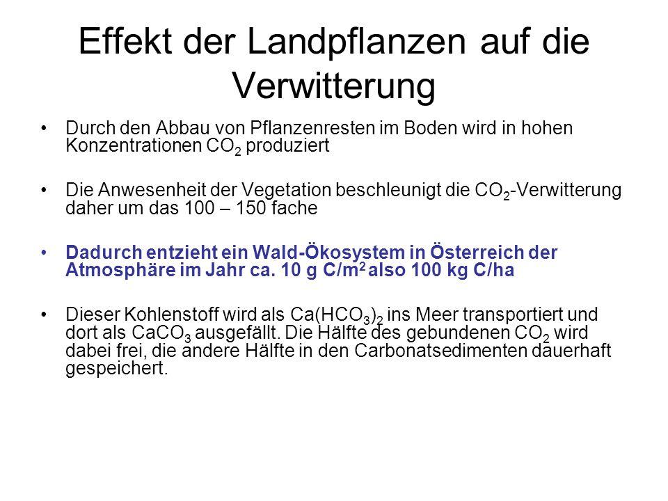 Effekt der Landpflanzen auf die Verwitterung Durch den Abbau von Pflanzenresten im Boden wird in hohen Konzentrationen CO 2 produziert Die Anwesenheit