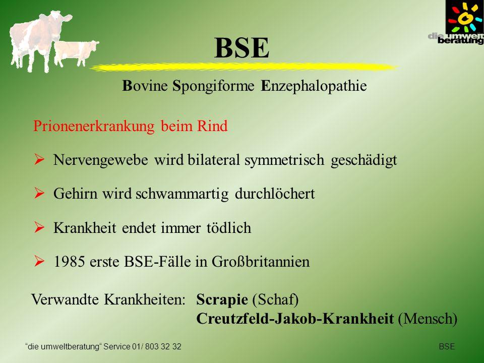 BSEdie umweltberatung Service 01/ 803 32 32 BSE Bovine Spongiforme Enzephalopathie Prionenerkrankung beim Rind Nervengewebe wird bilateral symmetrisch