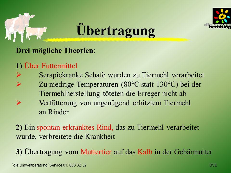 Drei mögliche Theorien: 1) Über Futtermittel Scrapiekranke Schafe wurden zu Tiermehl verarbeitet Zu niedrige Temperaturen (80°C statt 130°C) bei der T