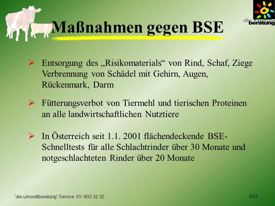 BSEdie umweltberatung Service 01/ 803 32 32 Maßnahmen gegen BSE Entsorgung des Risikomaterials von Rind, Schaf, Ziege Verbrennung von Schädel mit Gehi