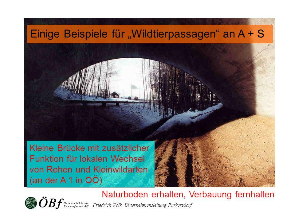 Friedrich Völk, Unternehmensleitung Purkersdorf Naturboden erhalten, Verbauung fernhalten Kleine Brücke mit zusätzlicher Funktion für lokalen Wechsel