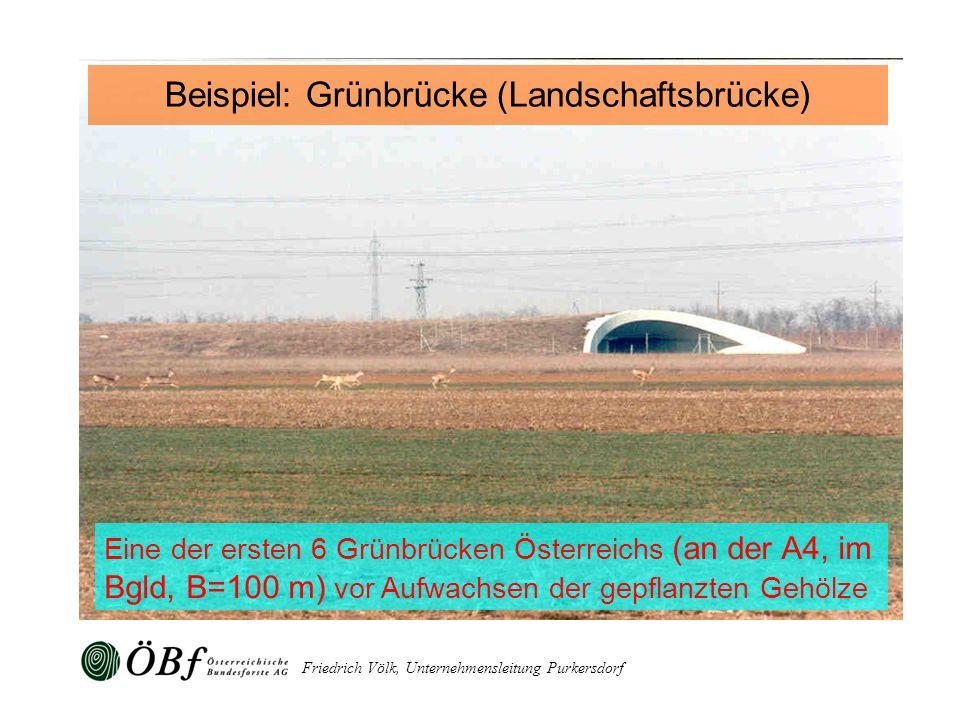 Friedrich Völk, Unternehmensleitung Purkersdorf Eine der ersten 6 Grünbrücken Österreichs (an der A4, im Bgld, B=100 m) vor Aufwachsen der gepflanzten