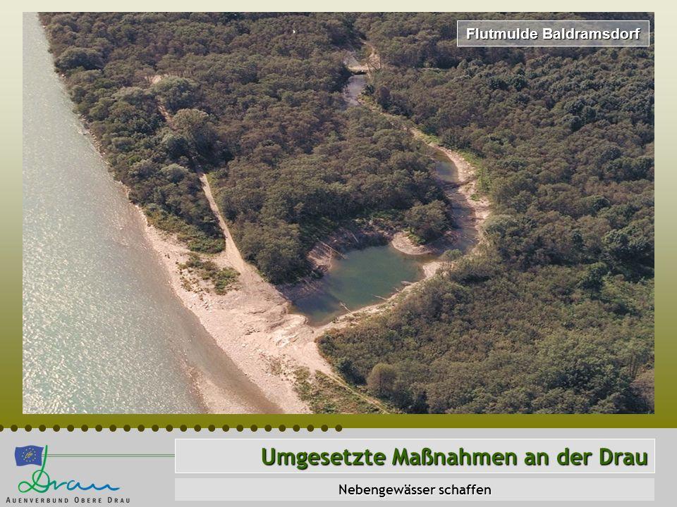Umgesetzte Maßnahmen an der Drau Nebengewässer schaffen Flutmulde Baldramsdorf
