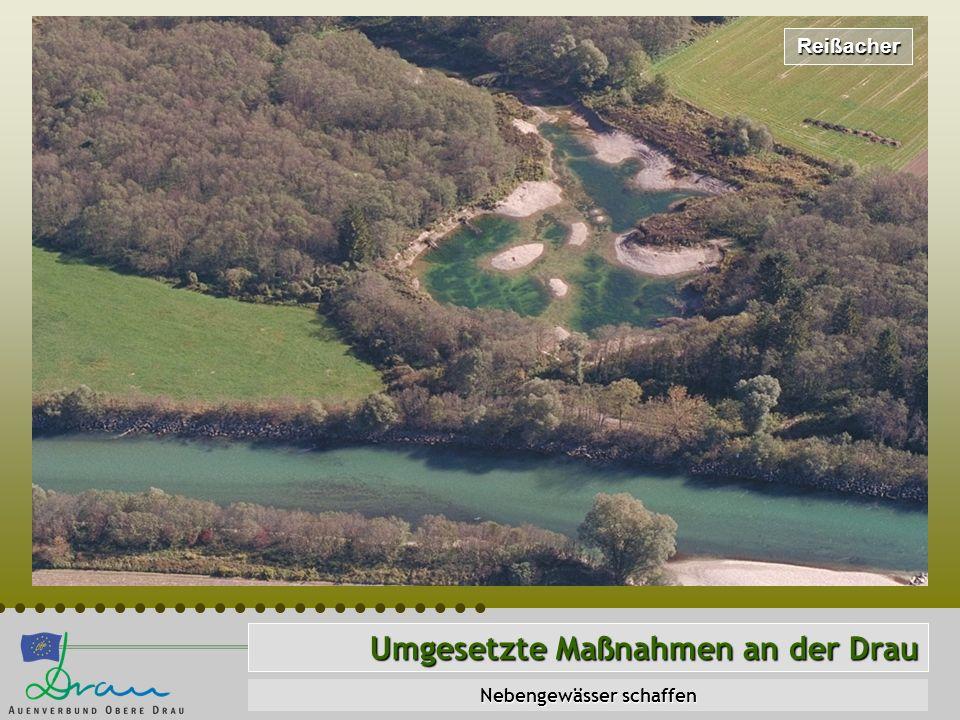 Reißacher Umgesetzte Maßnahmen an der Drau Nebengewässer schaffen