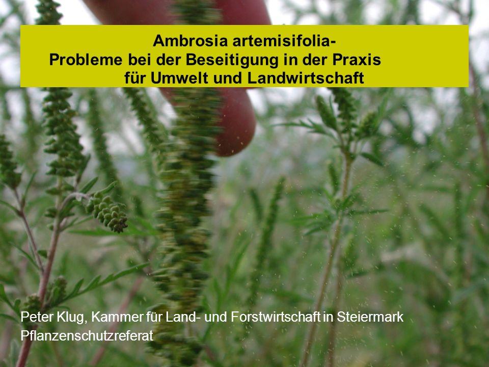 Peter Klug, Pflanzenschutzreferat Ambrosia artemisifolia- Probleme bei der Beseitigung in der Praxis für Umwelt und Landwirtschaft Peter Klug, Kammer
