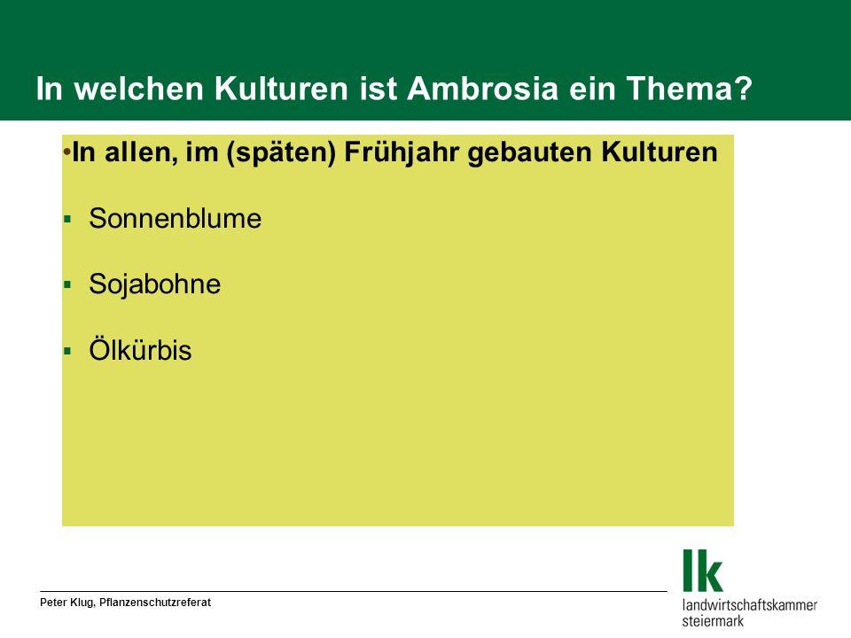 In welchen Kulturen ist Ambrosia ein Thema? In allen, im (späten) Frühjahr gebauten Kulturen Sonnenblume Sojabohne Ölkürbis
