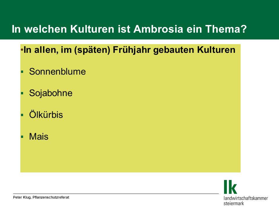 In welchen Kulturen ist Ambrosia ein Thema? In allen, im (späten) Frühjahr gebauten Kulturen Sonnenblume Sojabohne Ölkürbis Mais