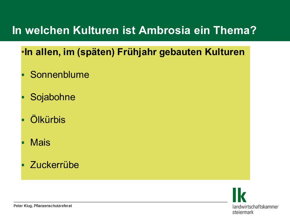 In welchen Kulturen ist Ambrosia ein Thema? In allen, im (späten) Frühjahr gebauten Kulturen Sonnenblume Sojabohne Ölkürbis Mais Zuckerrübe