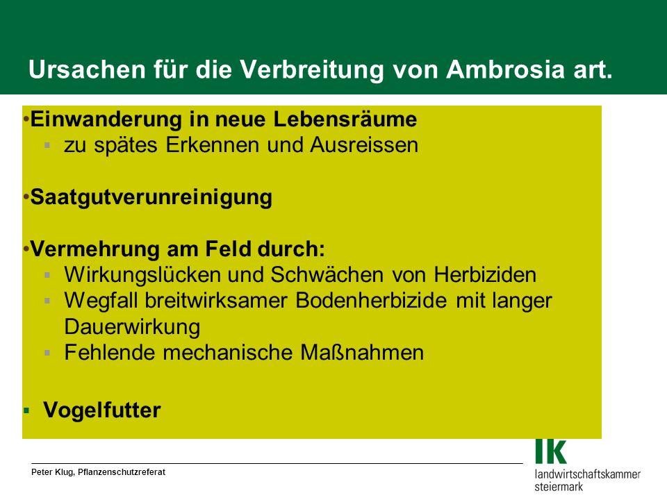 Peter Klug, Pflanzenschutzreferat Ursachen für die Verbreitung von Ambrosia art. Einwanderung in neue Lebensräume zu spätes Erkennen und Ausreissen Sa