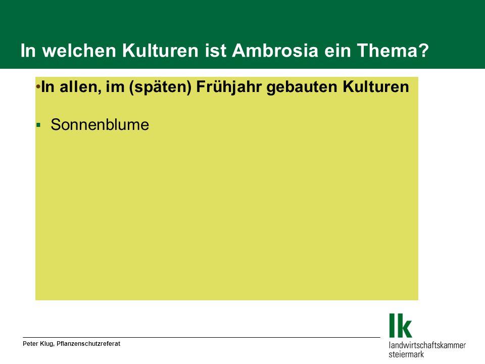 Peter Klug, Pflanzenschutzreferat In welchen Kulturen ist Ambrosia ein Thema? In allen, im (späten) Frühjahr gebauten Kulturen Sonnenblume
