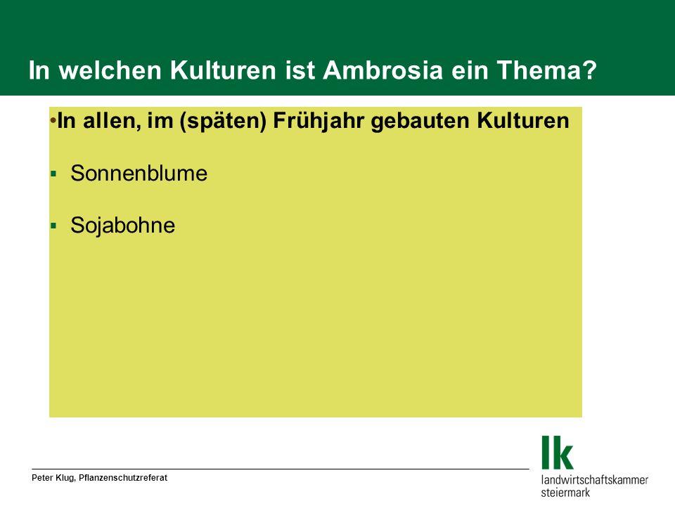 In welchen Kulturen ist Ambrosia ein Thema? In allen, im (späten) Frühjahr gebauten Kulturen Sonnenblume Sojabohne