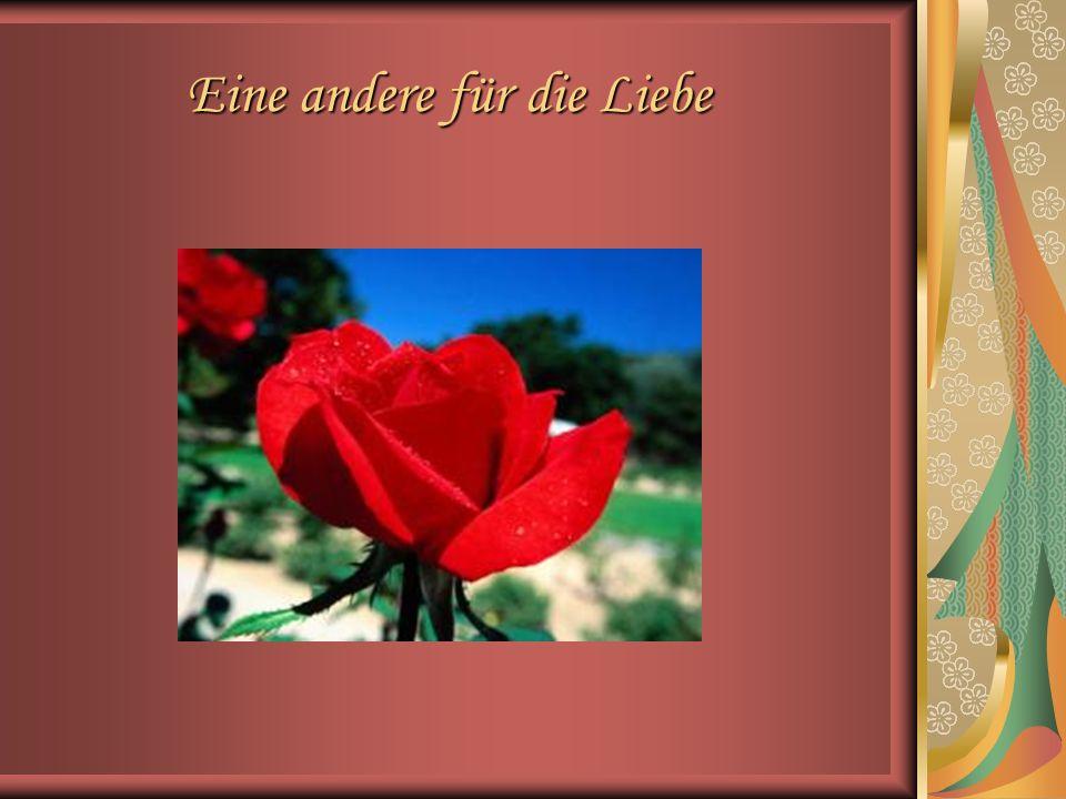 Eine Rose der Freundschaft