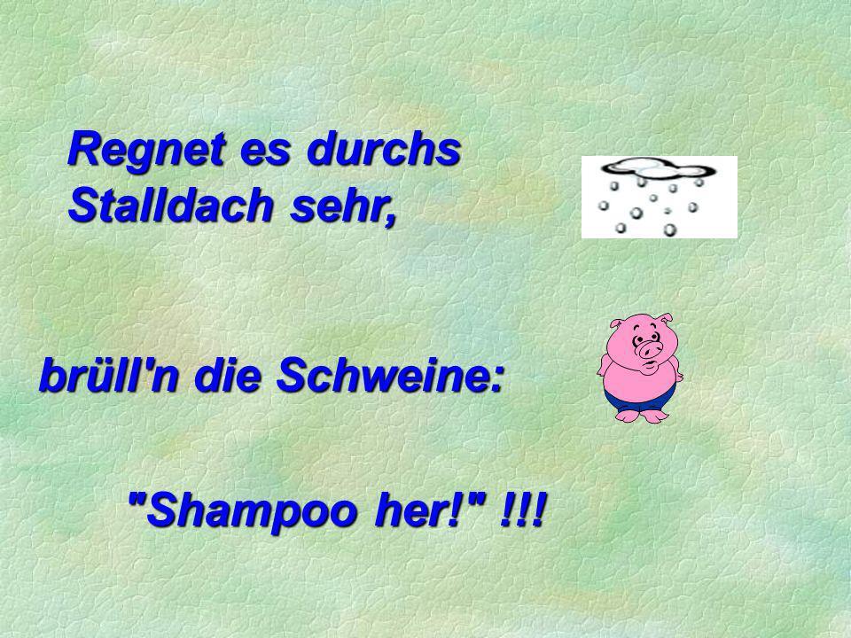 Regnet es durchs Stalldach sehr, brüll n die Schweine: Shampoo her! !!!