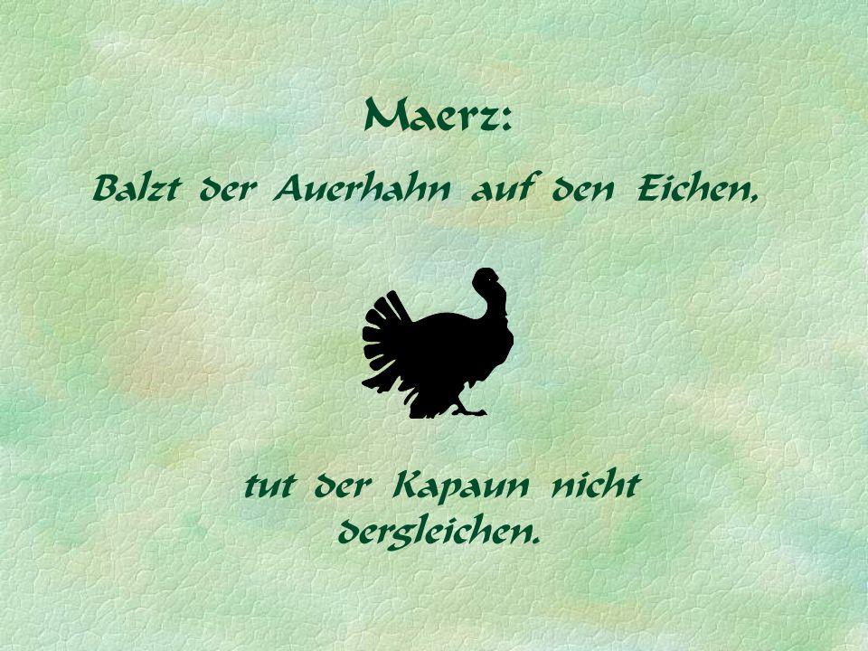 Maerz: Balzt der Auerhahn auf den Eichen, tut der Kapaun nicht dergleichen.