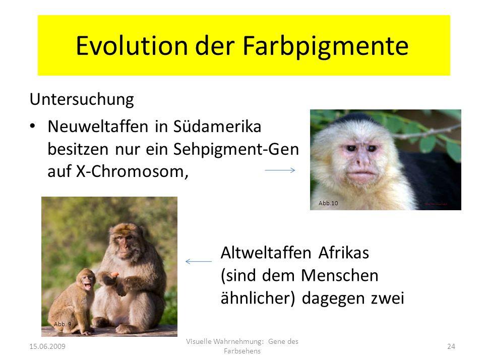 Evolution der Farbpigmente Untersuchung Neuweltaffen in Südamerika besitzen nur ein Sehpigment-Gen auf X-Chromosom, 15.06.2009 Visuelle Wahrnehmung: G