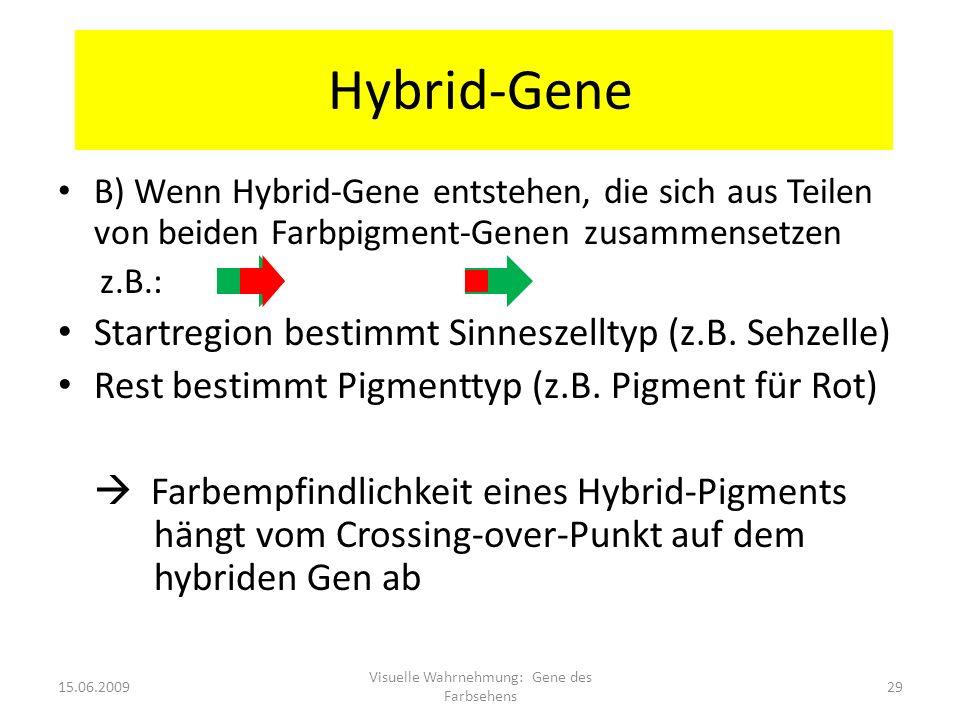 Hybrid-Gene B) Wenn Hybrid-Gene entstehen, die sich aus Teilen von beiden Farbpigment-Genen zusammensetzen z.B.: Rot Grün Startregion bestimmt Sinnesz
