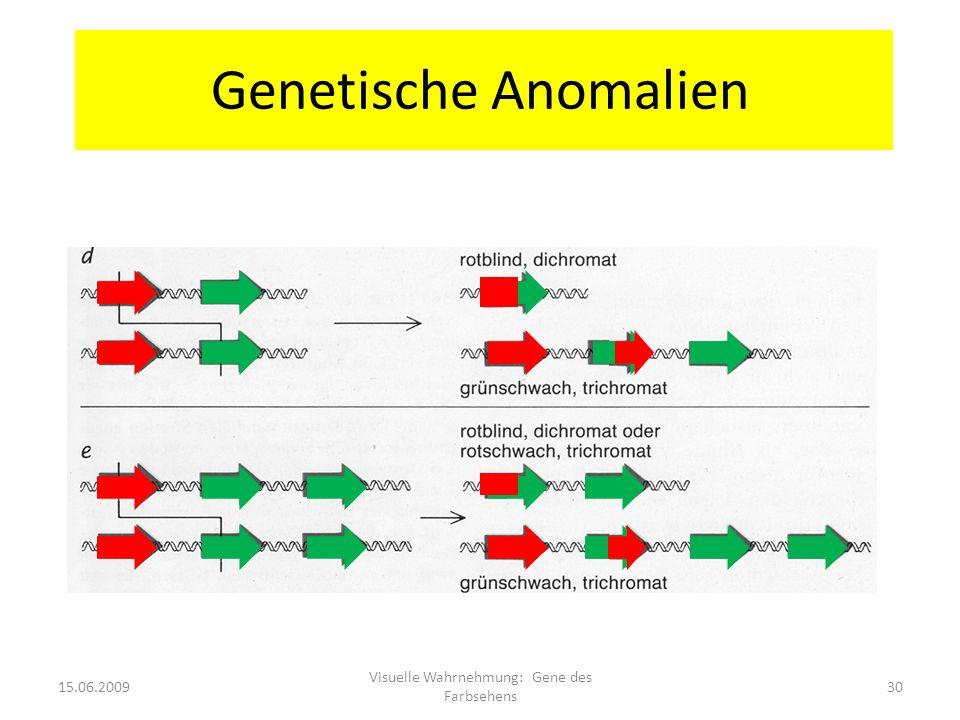 Genetische Anomalien 15.06.200930 Visuelle Wahrnehmung: Gene des Farbsehens