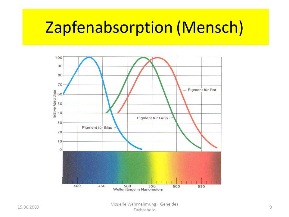 Zapfenabsorption (Mensch) 15.06.20099 Visuelle Wahrnehmung: Gene des Farbsehens