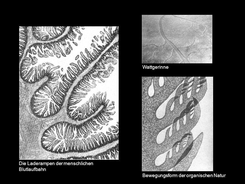 Bewegungsform der organischen Natur Wattgerinne Die Laderampen der menschlichen Blutlaufbahn