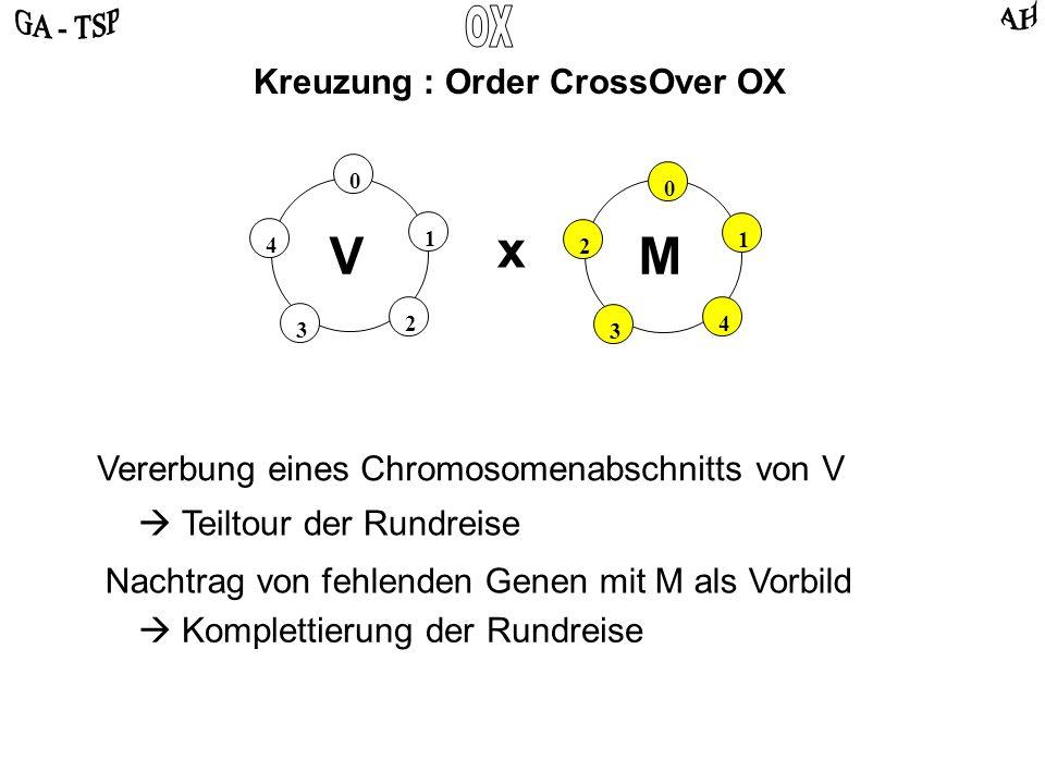 0 2 4 3 1 0 4 2 3 1 VM Kreuzung : Order CrossOver OX x Vererbung eines Chromosomenabschnitts von V Teiltour der Rundreise Nachtrag von fehlenden Genen mit M als Vorbild Komplettierung der Rundreise